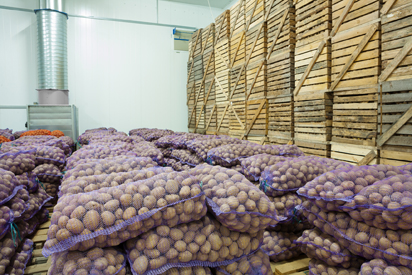 View of bags and crates of potato in storage house